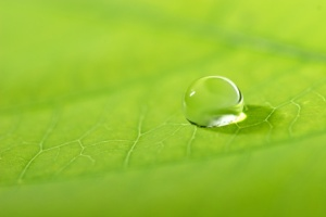 waterdrop on a leaf